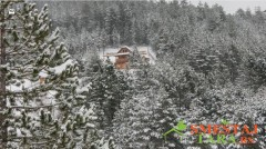 Planinska kuća Petkovac - vikendice na Tari